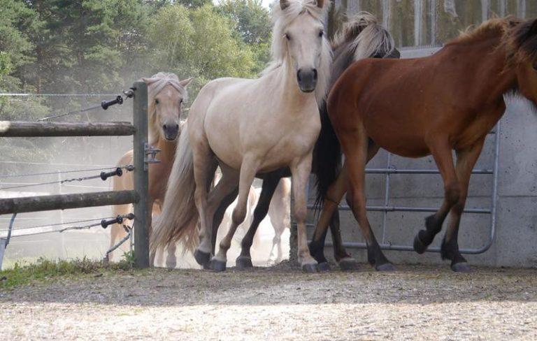 лошади резвяться на газонной решетке