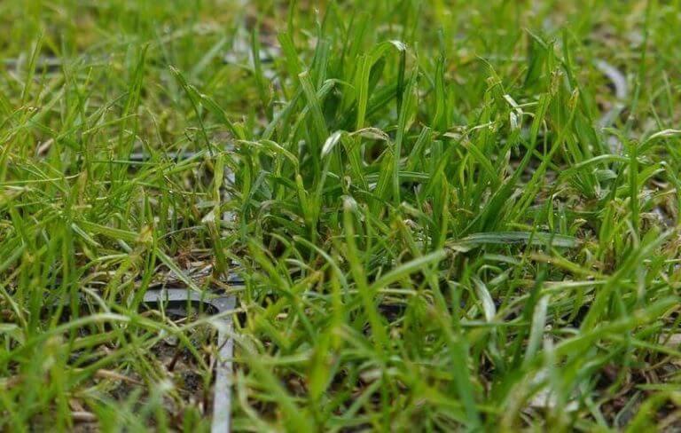 Газонная решетка с травой