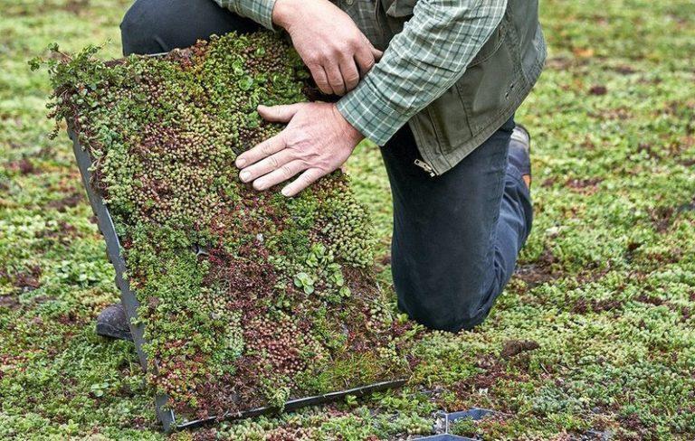 Озеленение крыш ECOSEDUM PACK 9