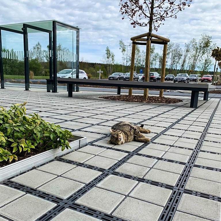 фото кота лежащего на дорожке из газонной решетки ECORASTER