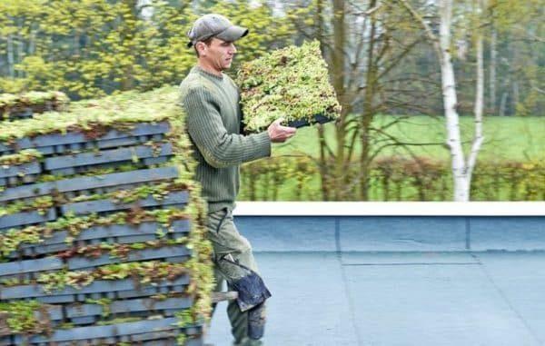 установка модулей для озеленения крыш