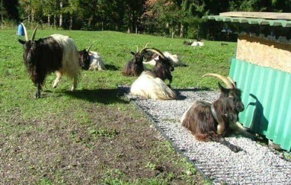 газонные решетки для животных
