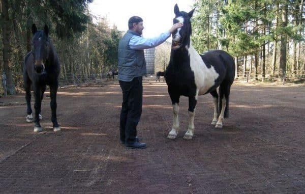 газонная решетка для выгула лошадей