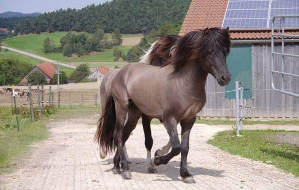 лошадь на газонной решетке