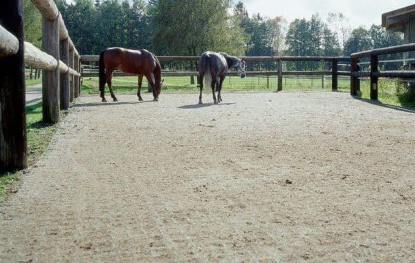 выгул лошадей на укрепленной газонной решеткой поверхности